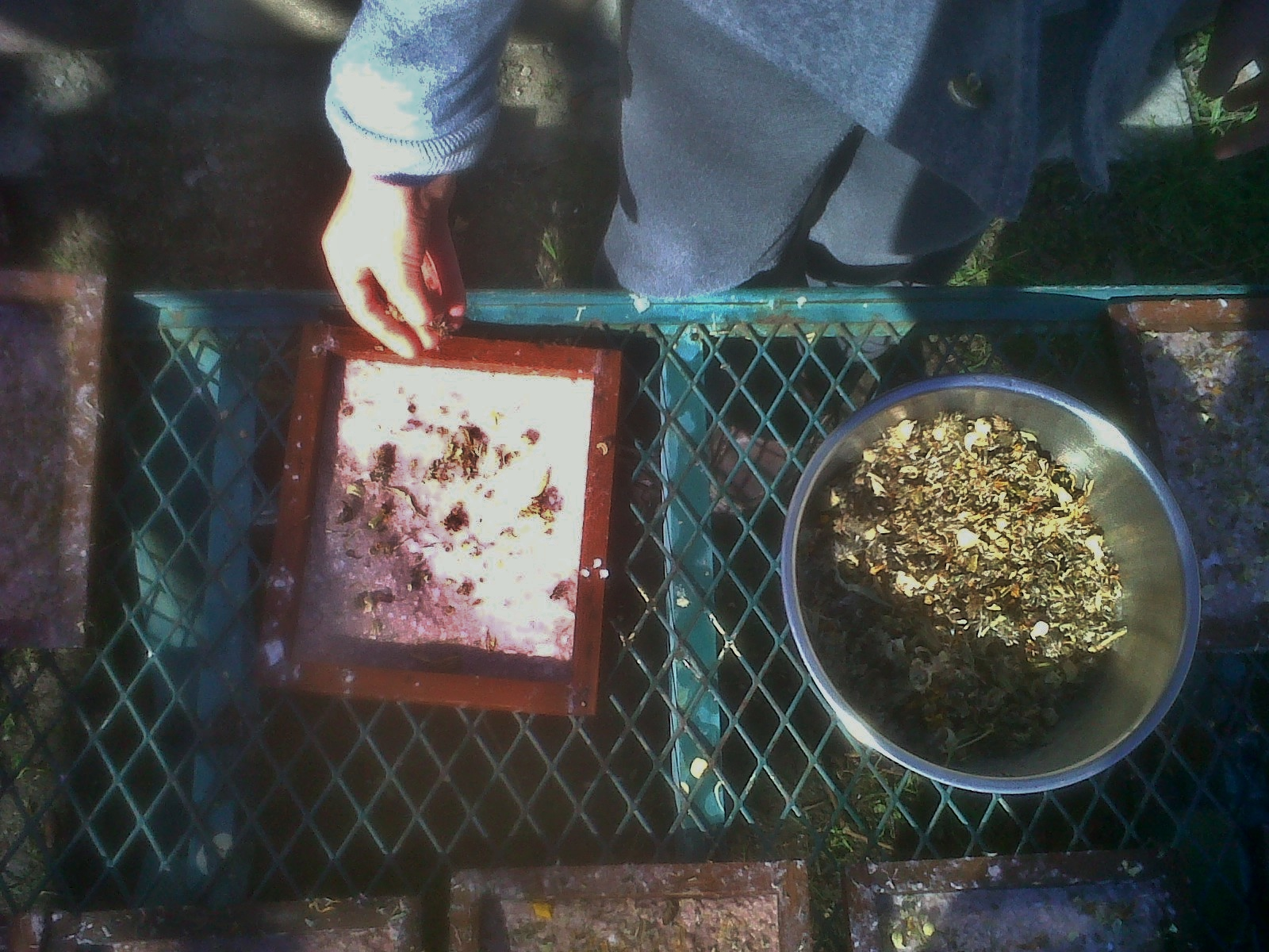Flower Seed Paper Making With Grade 1 Waldorf School Gardens